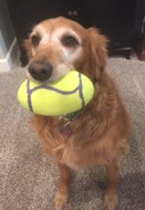 Joy's Favorite Ball